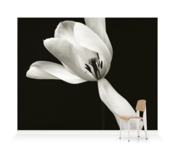 'White Tulip' Wallpaper Mural