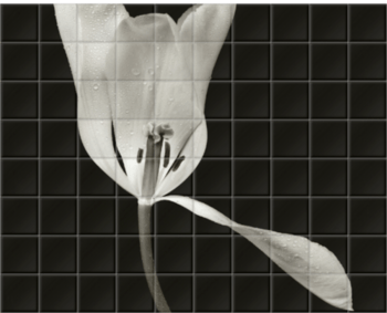 'White Tulip II' Ceramic Tile Mural
