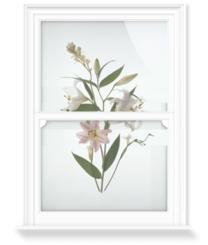 'Star Gazer' Lillies' Decorative Window Film