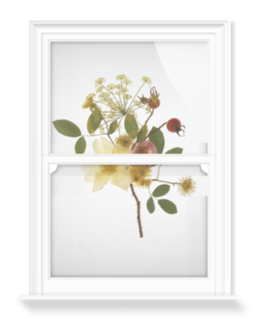 'June Flowers' Decorative Window Film