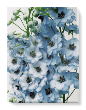 'Gathered Larkspur' Canvas Wall Art