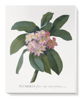 'Plumeria' Canvas Wall Art