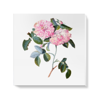 'Striped Monthly Rose' Canvas Wall Art