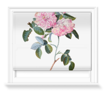 'Striped Monthly Rose' Roller Blind