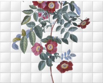 'Royal Virgin Rose' Ceramic Tile Mural