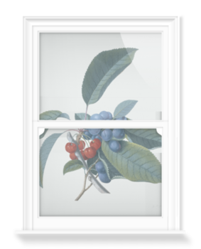'Red Cherries and Damsons' Decorative Window Film