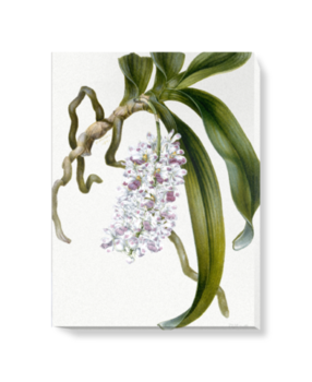 'Orchid Study' Canvas Wall Art
