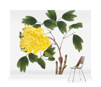 'Yellow Peony' Wallpaper Mural