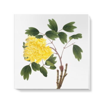 'Yellow Peony' Canvas Wall Art
