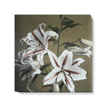 'Lily' Canvas Wall Art