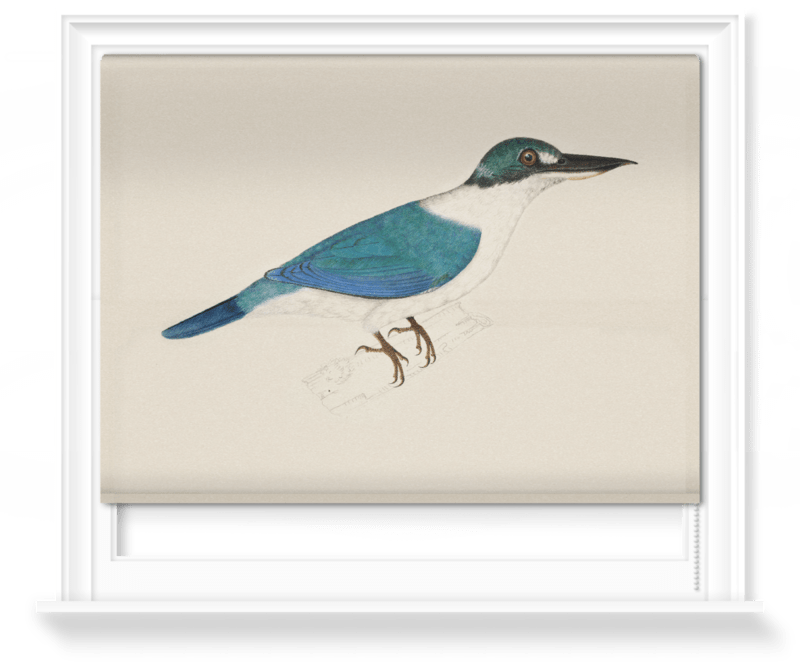 'White-Collared Kingfisher' Roller Blind
