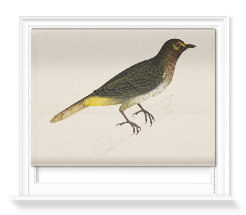 'Orange-spotted Bulbul' Roller Blind