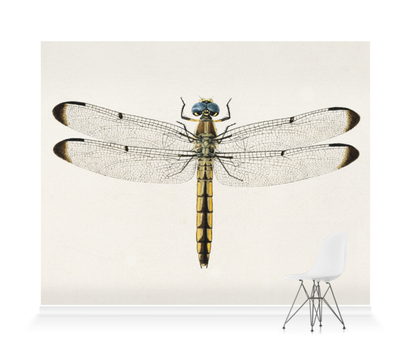 'Dragonfly 1' Wallpaper Mural   SurfaceView