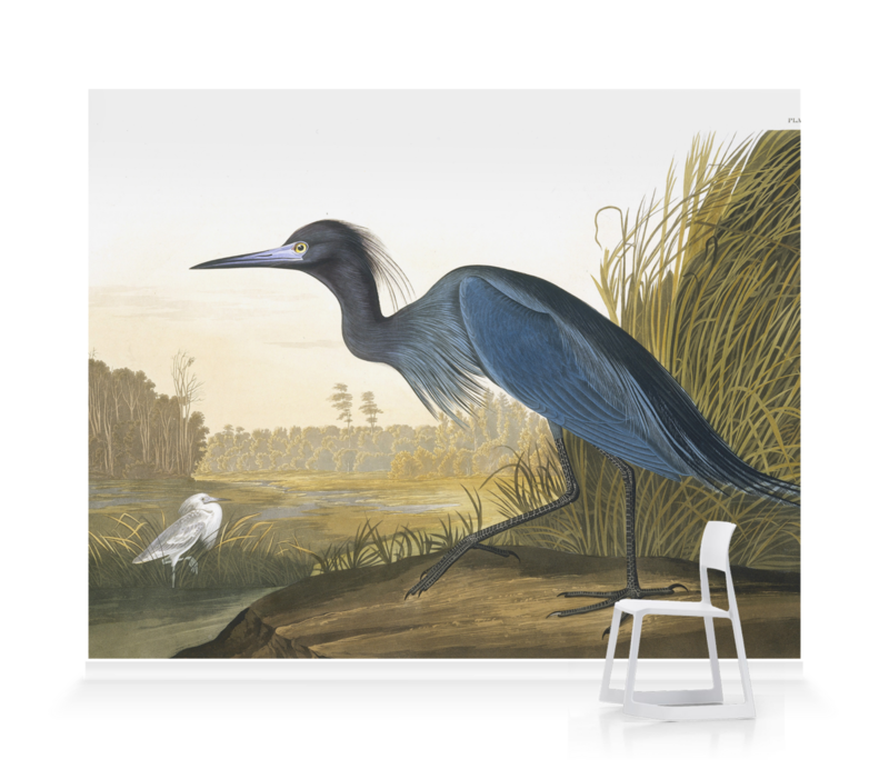 'Little Blue Heron, Egretta Caerulea' Wallpaper Mural