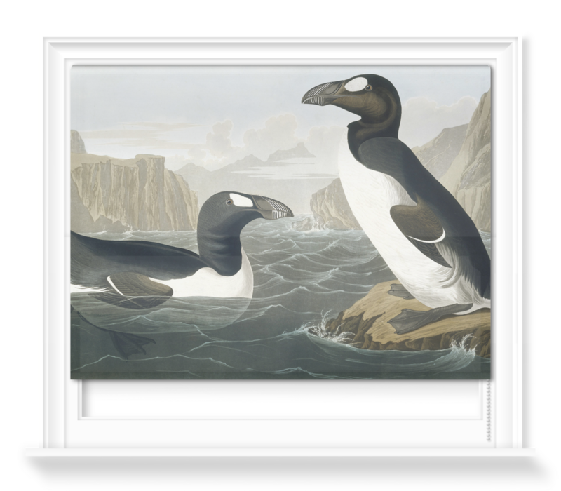 'Greek Auk, Pinguinus Impennis' Roller Blind