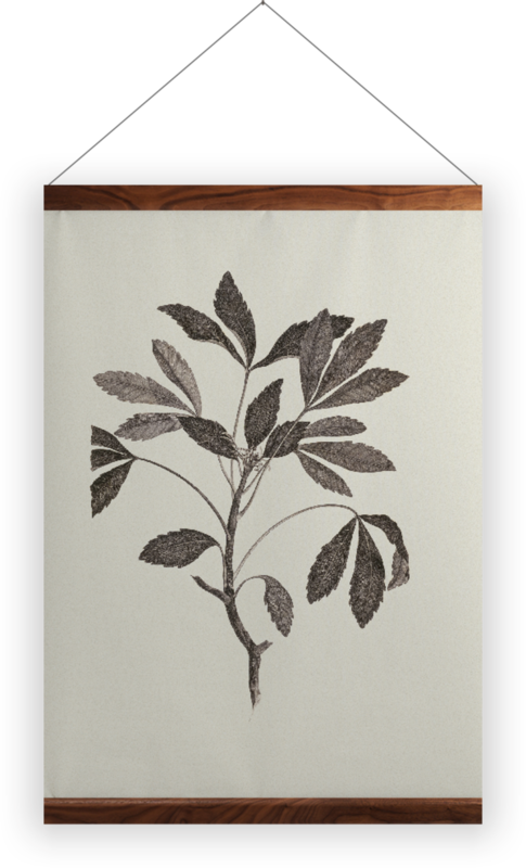'Pseudopanax Lessonii' Wall Hanging
