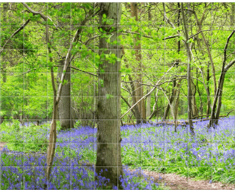 'Woodland Bluebells' Ceramic Tile Mural