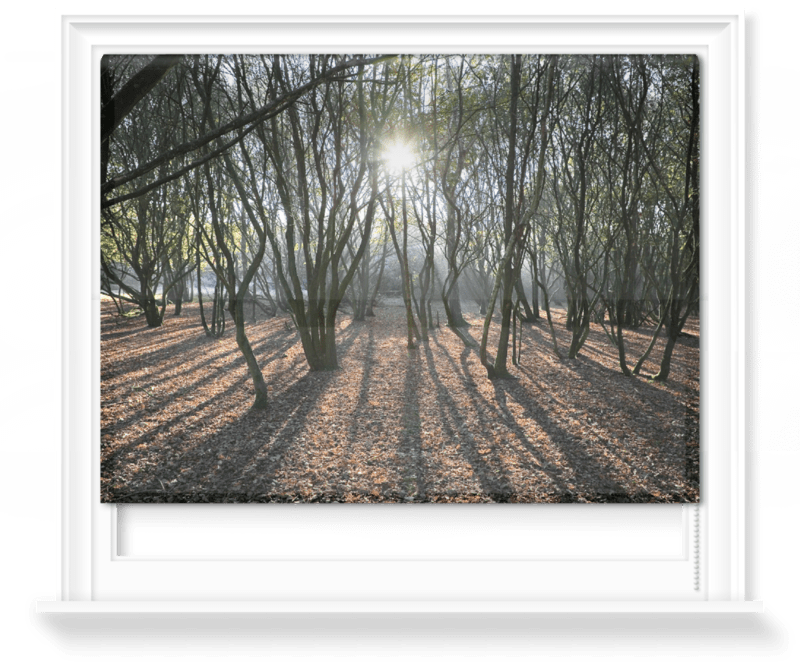 'Woodland Sunlight' Roller Blind