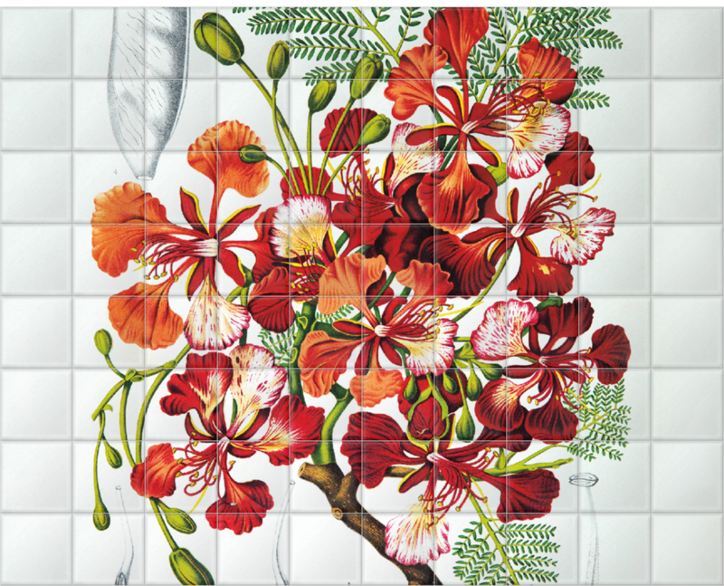 'Royal Poinciana [Poinciana regia]' Ceramic Tile Mural