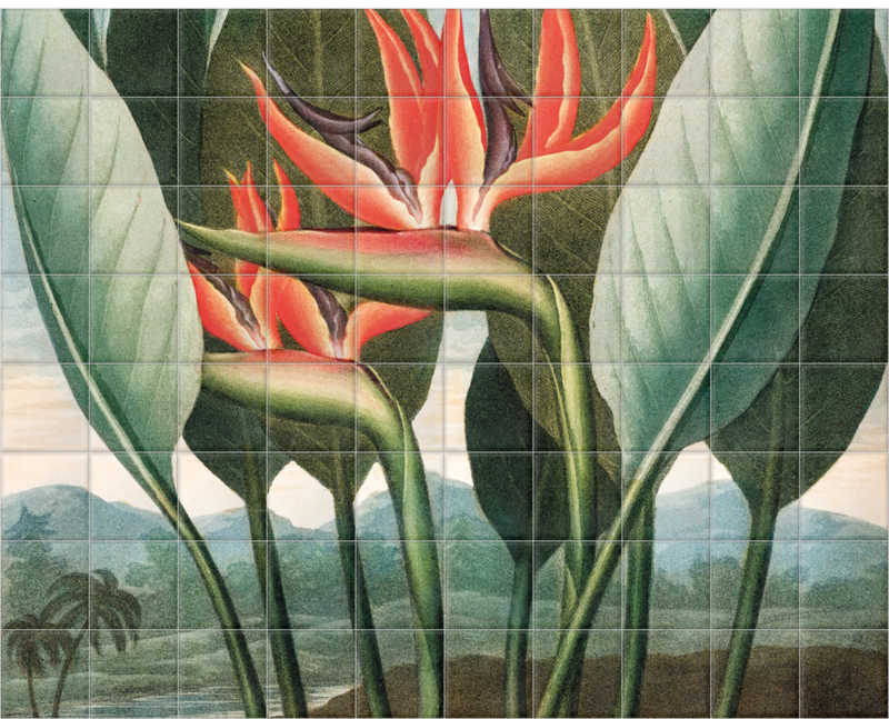 'Bird of Paradise [Strelitzia reginae]' Ceramic Tile Mural