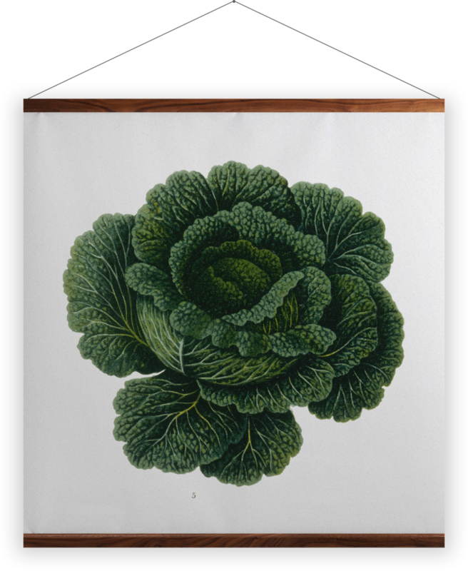 'Savoy Cabbage' Wall Hanging