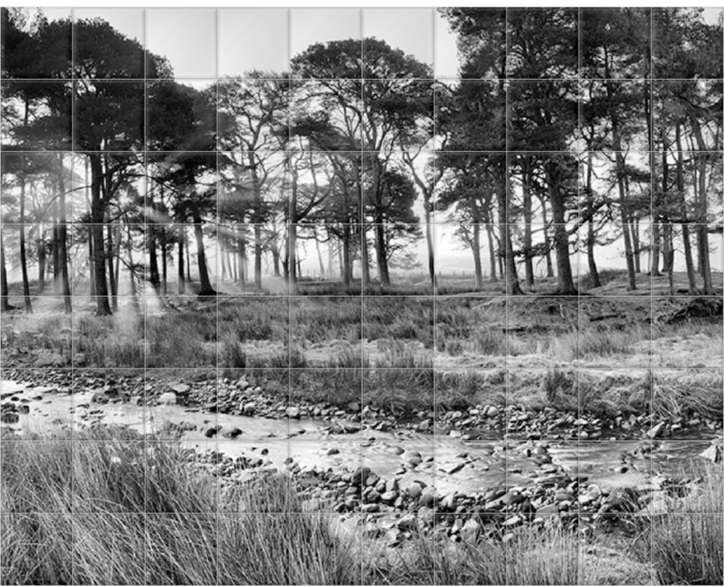 'Forest of Bowland II B&W' Ceramic Tile Mural