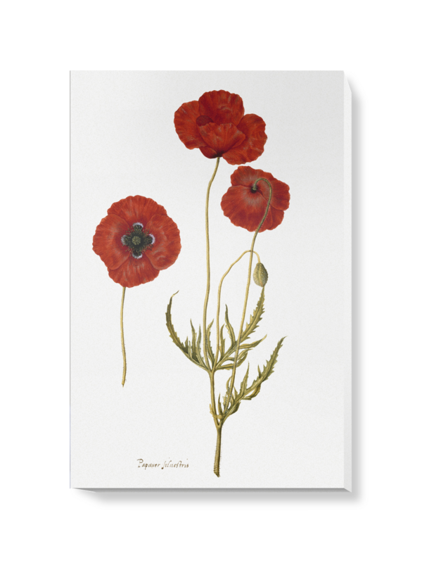 'Corn Poppy' Canvas Wall Art