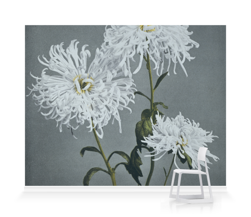 'Chrysanthemum' Wallpaper Mural