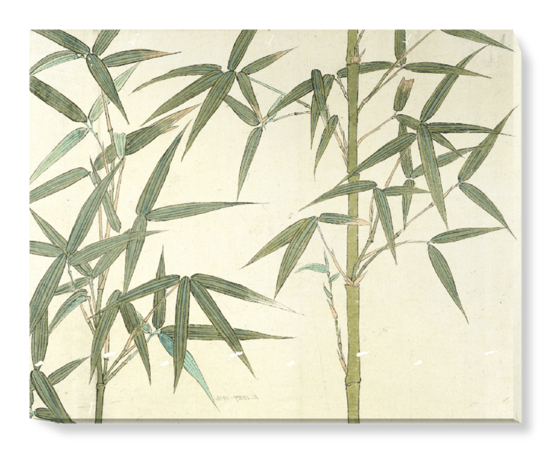'Drawing of Bamboo' Canvas Wall Art